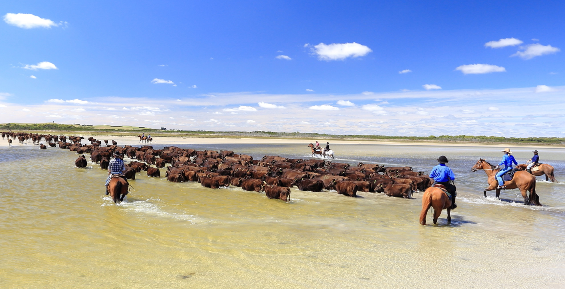 Robbins Island Cattle Run